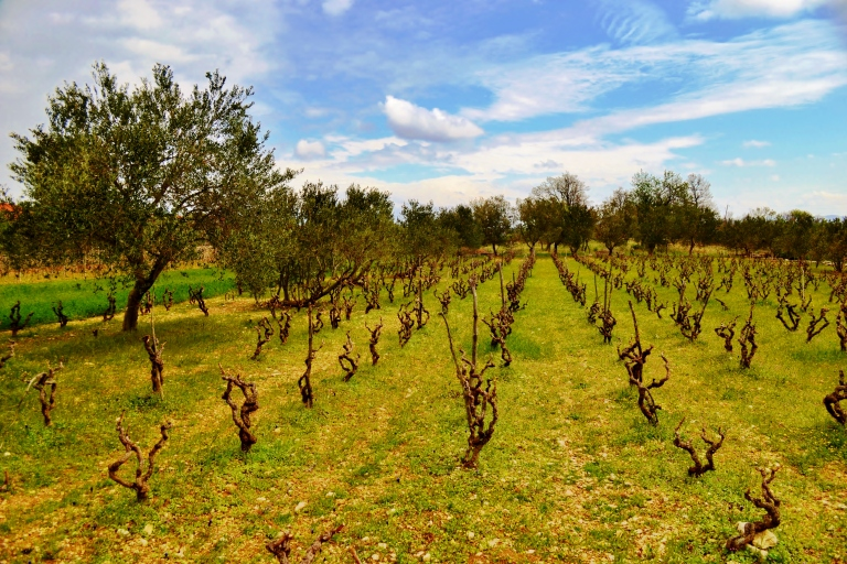 BIBICh Lučica vineyard (Copyright © Cliff Rames)