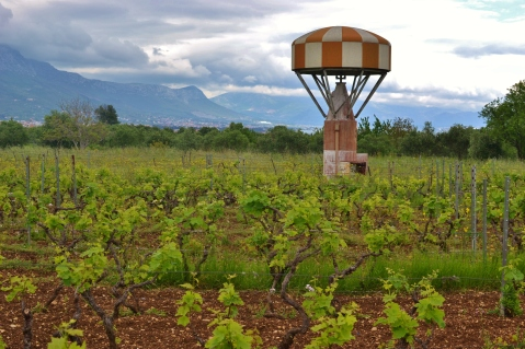 "Ivica Radunic's ""Original Zin"" vineyard in Kastel Novi (photo by Cliff Rames)"